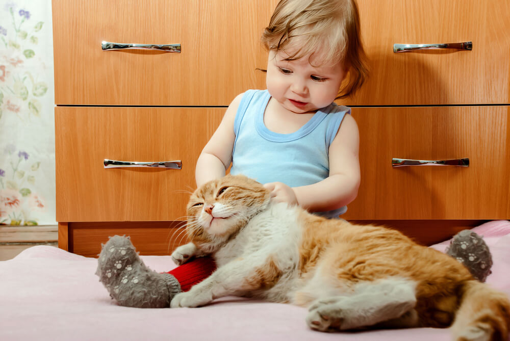 a little boy playing with a fat cat.
