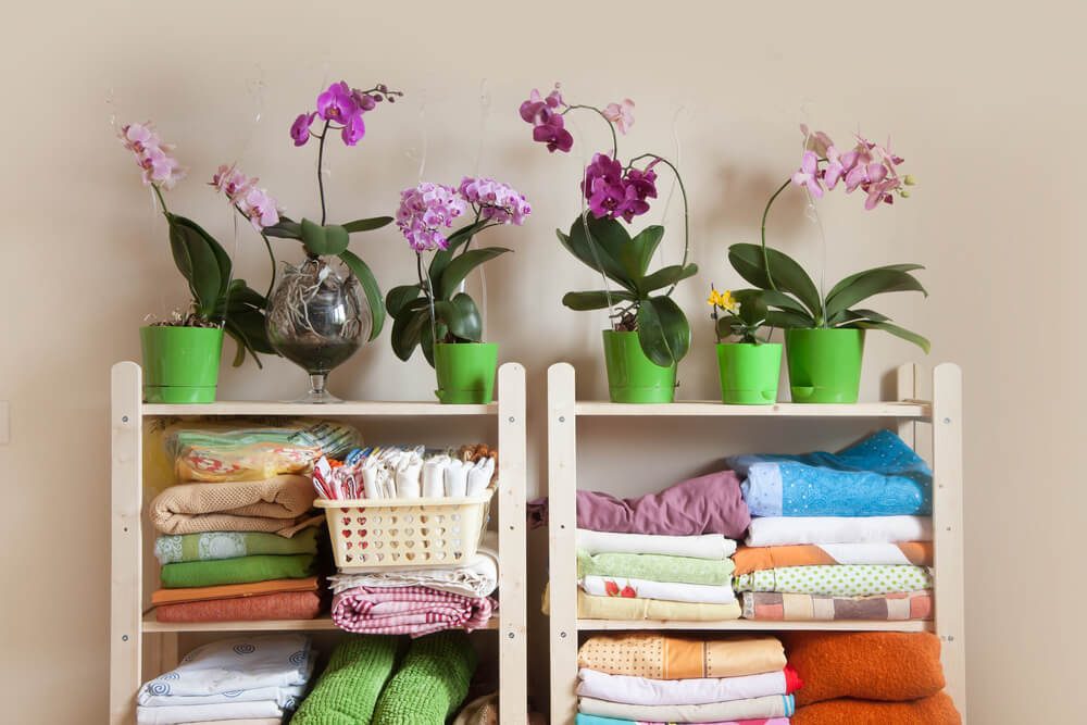 organized clothes and potted flowers on shelves